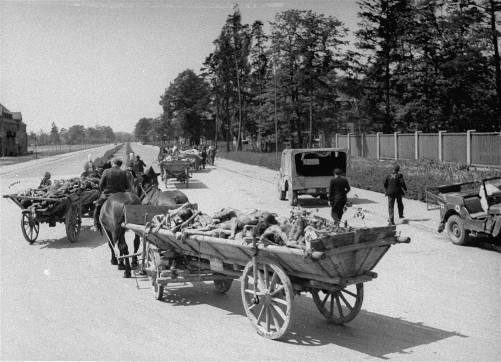 Carts laden with corpses leave the Dachau concentration camp on route to a burial site.  Allied authorities required local farmers to drive their loaded carts through the town of Dachau as an education for the inhabitants.
