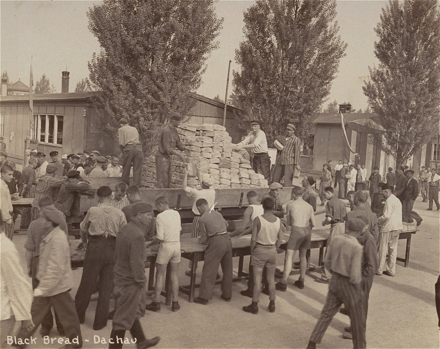 Survivors in Dachau distribute bread to their comrades after liberation.