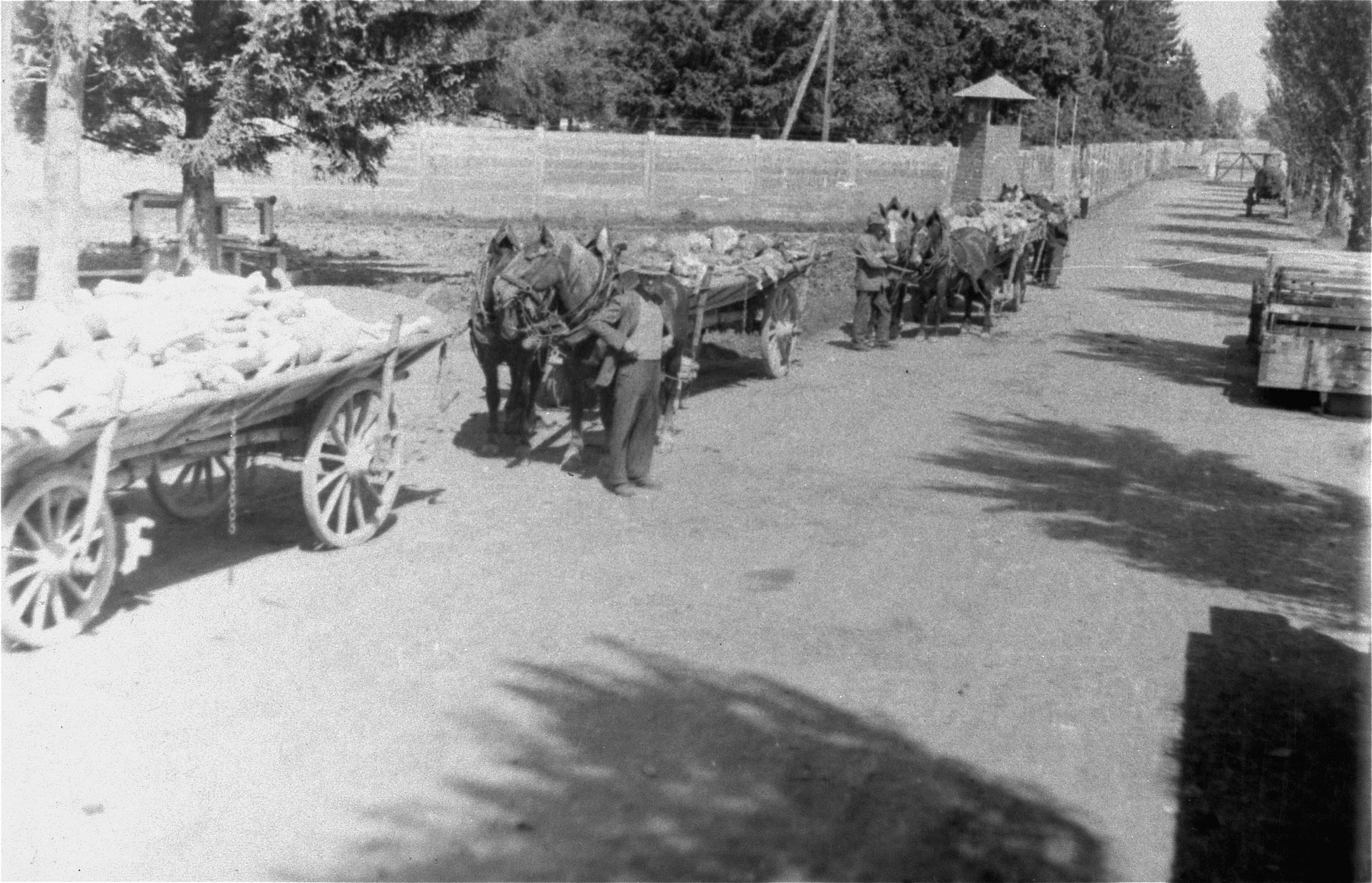 German civilians transporting corpses from the Dachau concentration camp to a nearby site for burial.