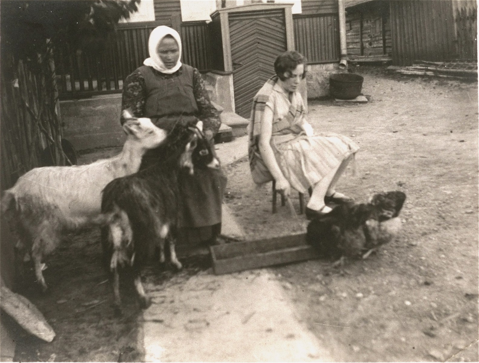 A young Jewish woman feeds chickens in a courtyard in Siauliai, Lithuania.  Pictured on the right is Sonia (Lowenstein) Schereschevsky, the donor's great aunt, just before she left Siauliai to join her husband, Nathan, in South Africa.  An unidentified women on the left feeds two goats.