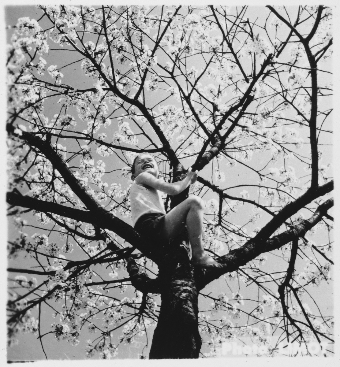 A young boy climbs a tree outside the Mehoncourt children's home.