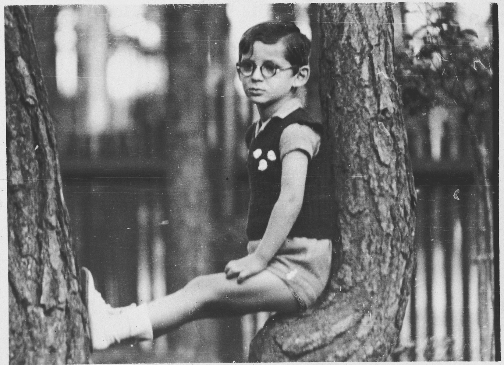 A young boy sits on the branch of a tree.