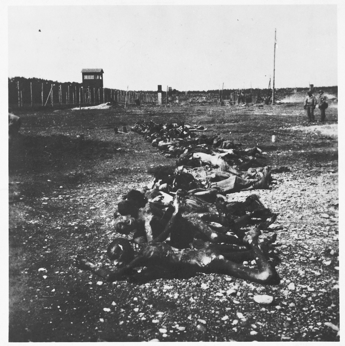 Bodies are laid out in a row for burial in the Dachau concentration camp.