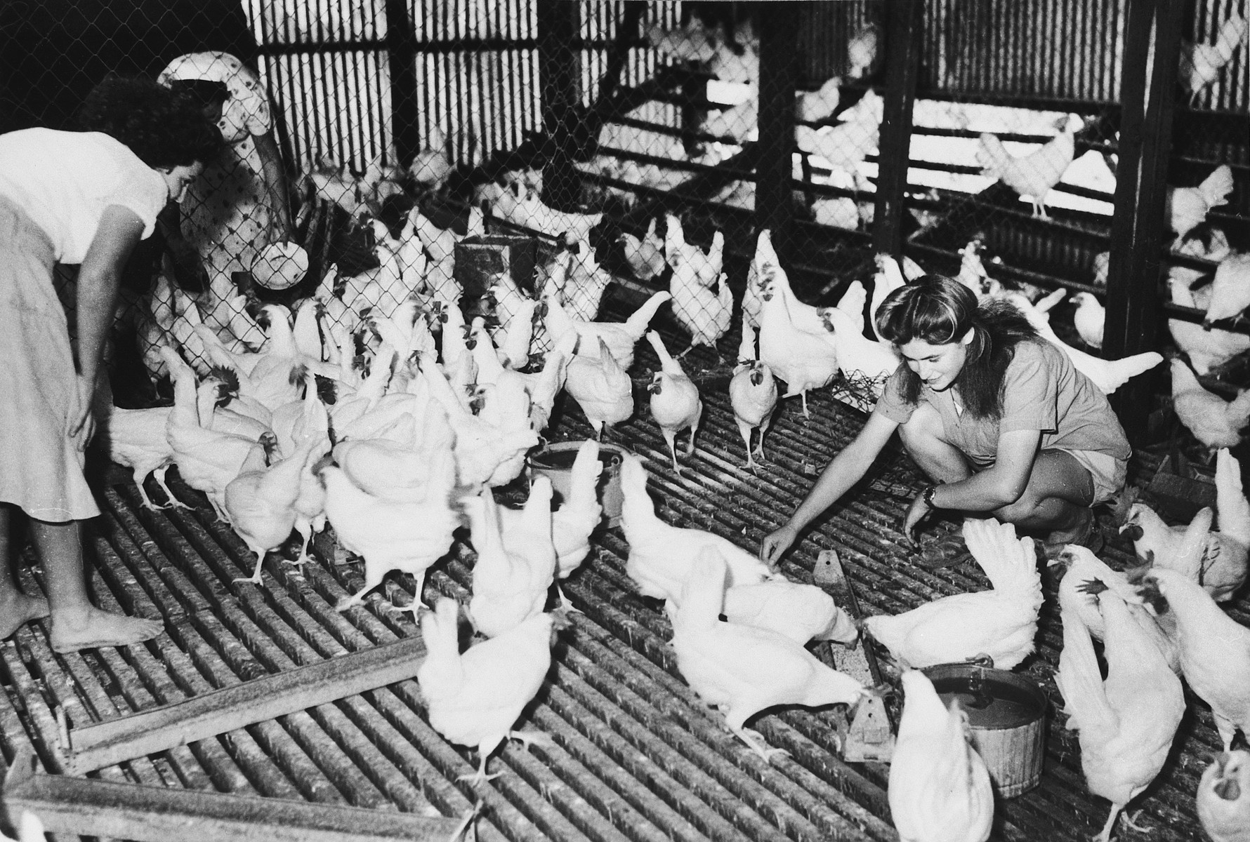 A new immigrant to Israel feeds chickens in a hen house in Tel Shachar.