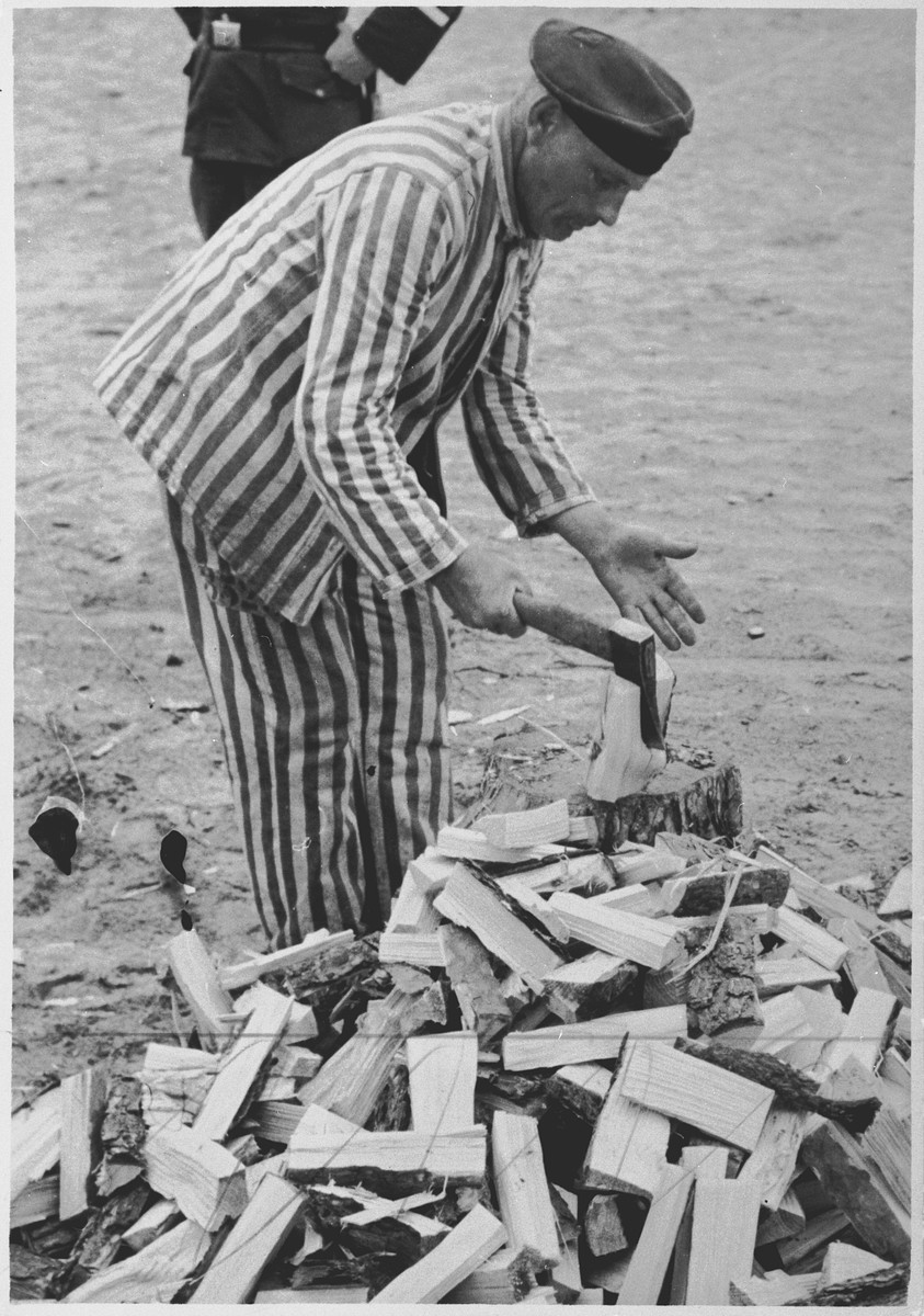 A prisoner at forced labor splits wood in the Sachsenhausen concentration camp.