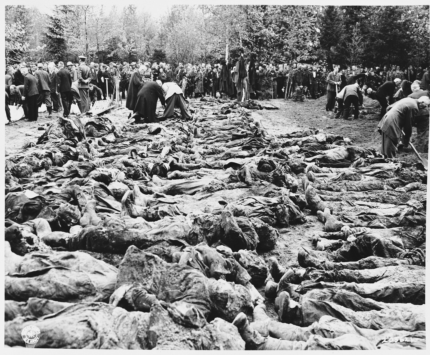 """Under American Army supervision, townspeople from Hannover are forced to watch as Nazi Party members exhume the bodies of 200 Russian officers and others shot by the SS near Wuelfel.  On April 8, 1945, 200 Red Army officers and other prisoners of war were sent on a death march from the Liebenau labor camp, 50 kilometers NW of Hanover, where the prisoners worked in a munitions factory.  As they reached Wuelfel, a suburb of Hanover, the SS guards ordered 25 prisoners, including one woman, to dig a large grave.  While this was being done, a prisoner killed a guard with a shovel and was able to escape to the woods nearby.  From there he heard the shots as the remaining prisoners were killed and buried in the grave.  Several weeks later, as American troops swept through the area, the mass grave was discovered.  On May 2, the 35th Division of the U.S. Ninth Army gathered townspeople from Wuelfel and forced them to exhume the grave, wrap the bodies in sheets, and rebury them near the Hanover City Hall.  Before reburial, many of the victims were identified by friends and relatives remaining in the area.  The original Signal Corps photo reads,  """"NAZIS MASSACRE RUSSIAN PRISONERS April 8, 1945, Nazi SS troops shot over 200 Russian Army officers and enlisted men, prisoners-of-war at Wulfel, a suburb of Hanover, Germany.  The victims were marching to Wulfel from their previous prison camp near Libenau, 50 kilometers from Hanover, as the Americans took the latter city.  Twenty-five of the victims, including a woman, were forced to dig the graves before being murdered.  During the proceedings one of the group killed a German guard with a shovel, escaped into the woods nearby and heard the shooting as the Germans massacred his comrades in cold blood.  The bodies were put into mass graves and hastily covered with earth.  When troops of the 35th Division, Ninth U.S. Army, took over the camp, German civilians and Nazi Party members of Hanover were orderd to witness and to participate """