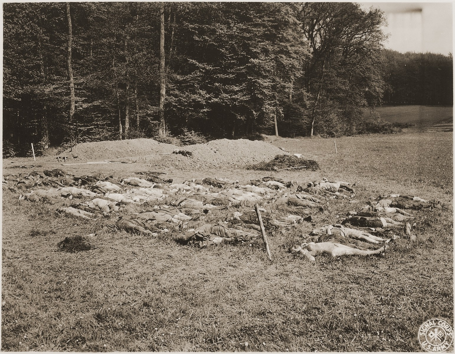 The corpses of prisoners exhumed from a mass grave near Hirzenhain lie out in a field.