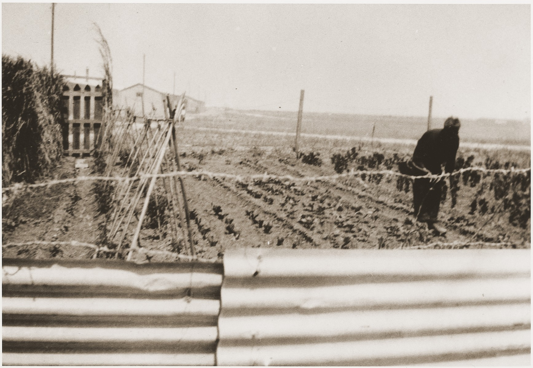 Garden belonging to Secours Suisse aux enfants in the Rivesaltes internment camp.