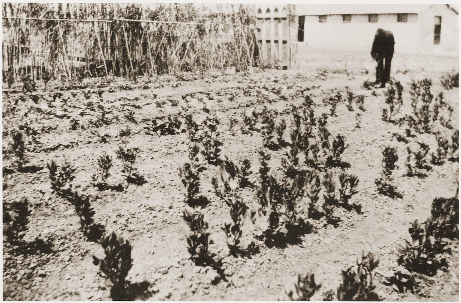 Garden belonging to Secours Suisse aux enfants in the Rivesaltes internment camp.