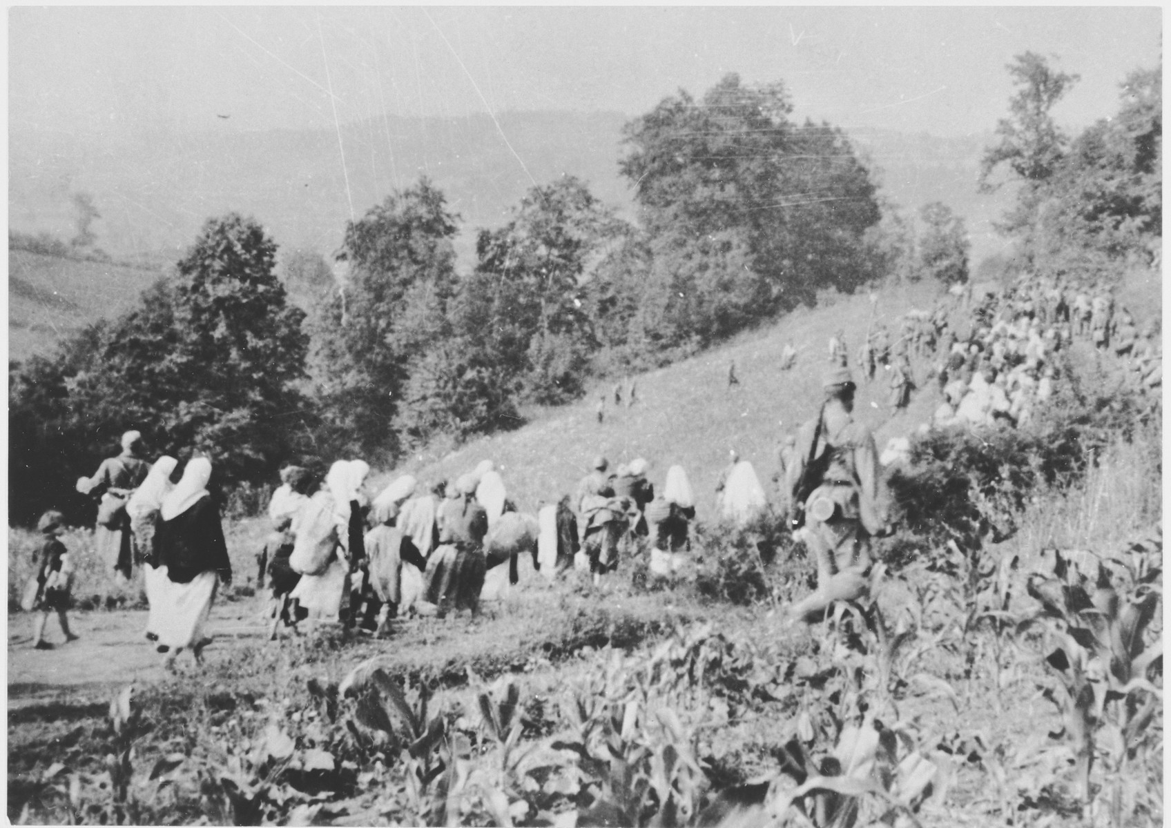 [Probably Serbian women and children from the Kozara region who have been rounded-up for deportation, marching through a field.]
