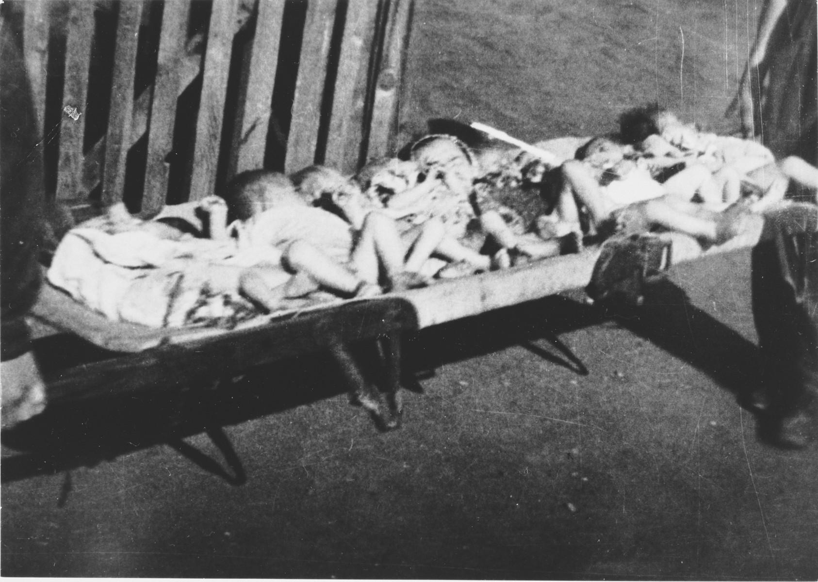 Yugoslav infants lie in a row on a stretcher in the Jastrebarsko concentration camp.