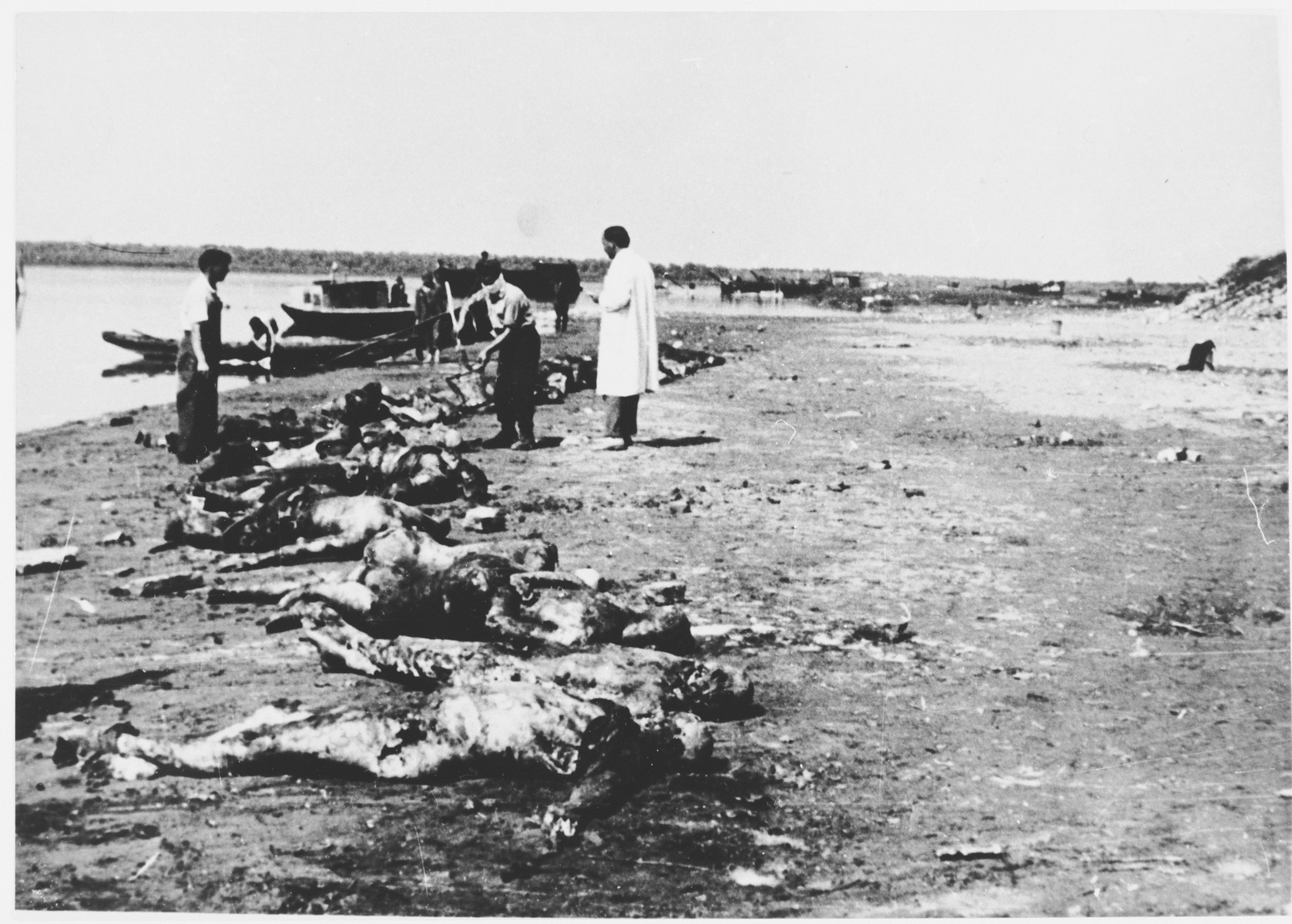 Dr. Ante Preru, a forensic specialist, oversees the retrieval of the bodies of concentration camp victims from the Sava River [probably near the Jasenovac concentration camp].