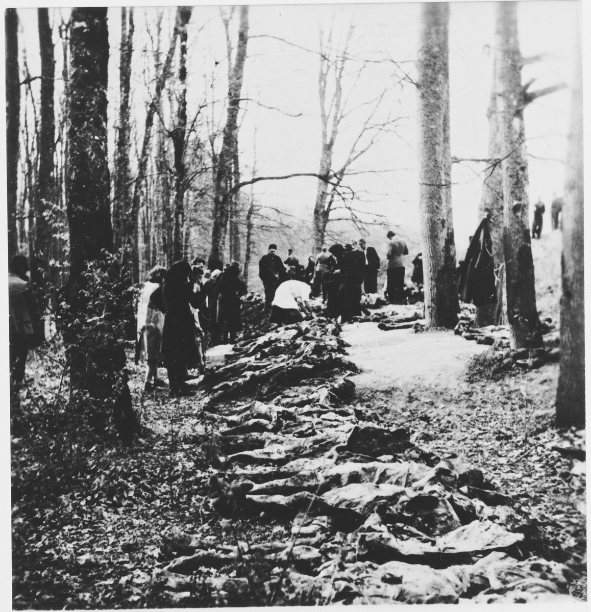 A Yugoslav war crimes investigator (Professor Sh. Premer) examines exhumed bodies in the Uskoci Forest.