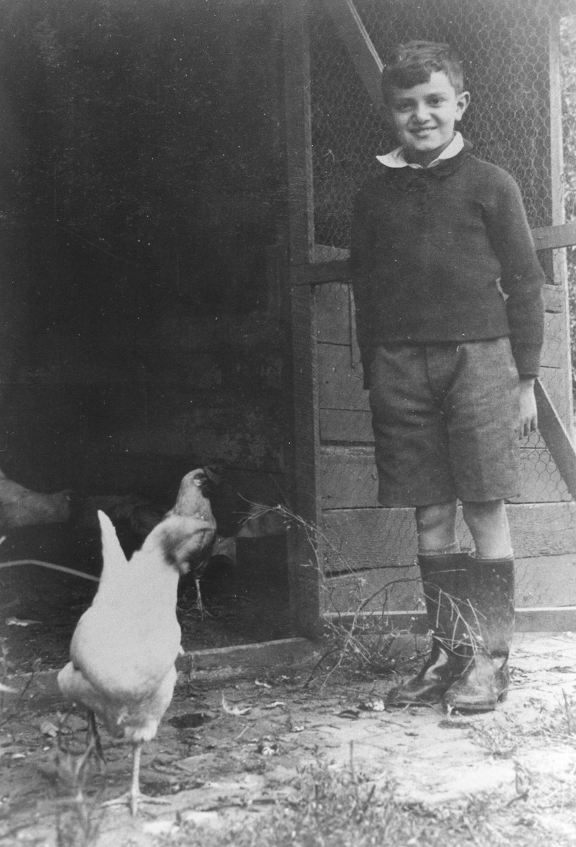 German-Jewish refugee, Hermann Levy, helps care for chickens in the Larino home in Melbourne.  He was part of a group of seventeen children, aged twelve or under, who were the only German-Jewish children to be sheltered in Australia during the war.