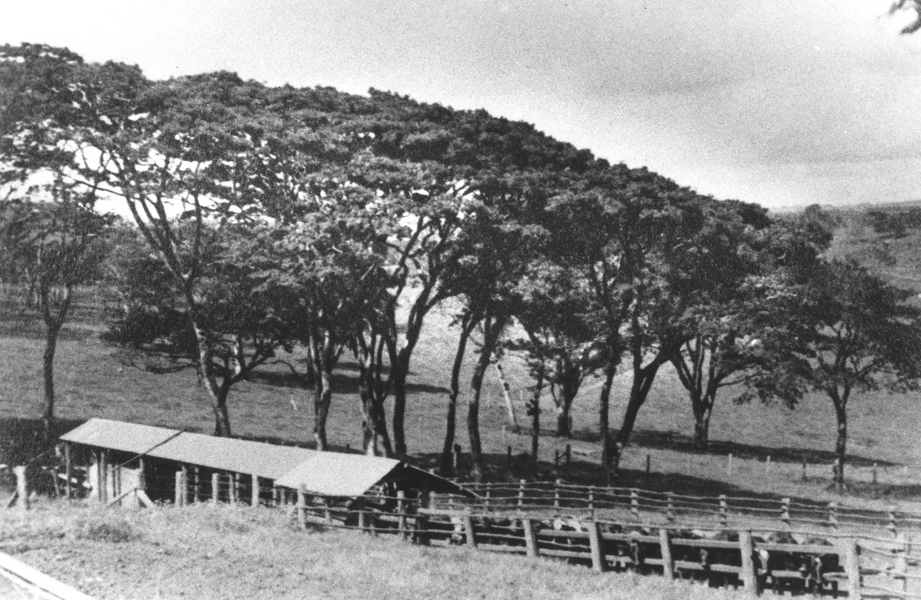 View of the Berg farm near Limuru, Kenya (Kiambu district), where the German Jewish family found refuge during World War II.