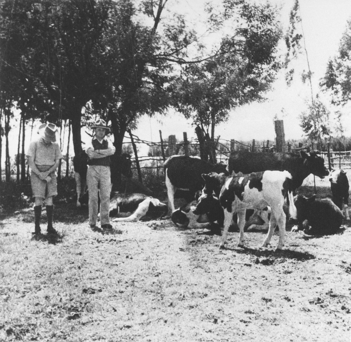 Two Jewish refugees from Germany stand among their dairy cows on their farm near Limuru, Kenya (Kiambu district), where they found refuge during World War II.  Pictured are George and Joseph Berg.