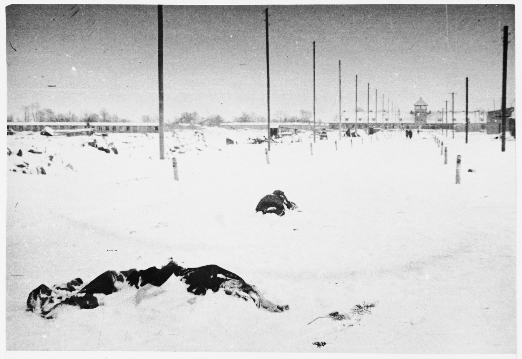 """The bodies of prisoners who perished during the evacuation of Auschwitz-Birkenau lie covered in snow on the main street of the camp immediately after the liberation.  Original caption:  """"The trail of evacuation, marked by bodies every few steps.  Those who fell were killed on the spot."""""""