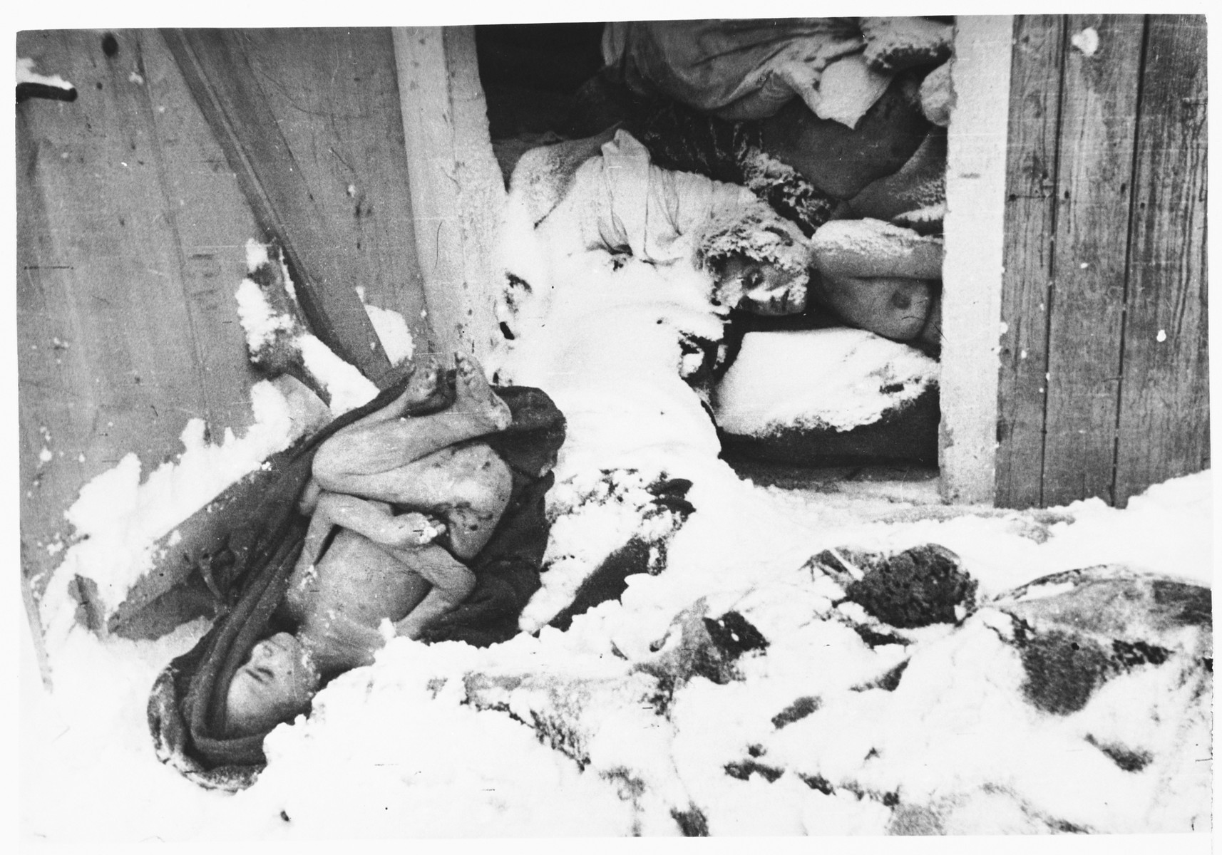 """The corpses of prisoners killed just prior to the evacuation of Auschwitz-Birkenau tumble out of a shed into the snow when it is opened after the liberation.  Original caption:  """"A store of """"human fuel"""", handily by the ovens.  The shed was full of bodies piled up to the ceiling.  When the doors were opened, some cadavers tumbled out."""""""