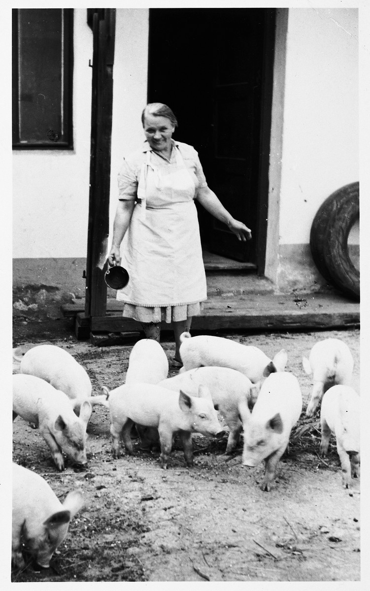 Polish rescuer Manya Blazek feeds the pigs on her farm in Plana nad Luznici, Czechoslovakia.  Manya's family sheltered Blanka and Pavel Heller during the war and preserved their belongings after their deportation.