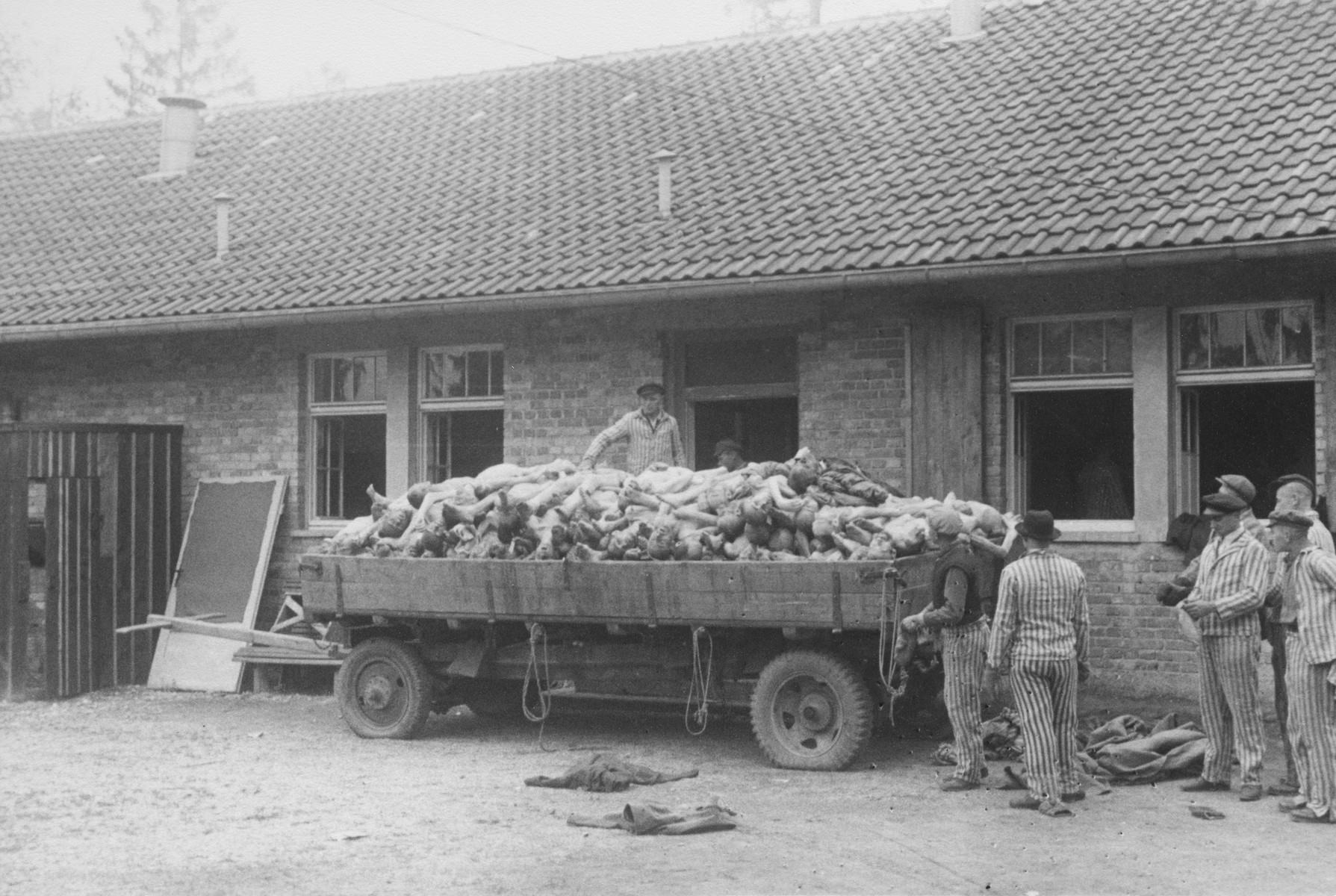 Liberated prisoners pile corpses onto a cart in Dachau.
