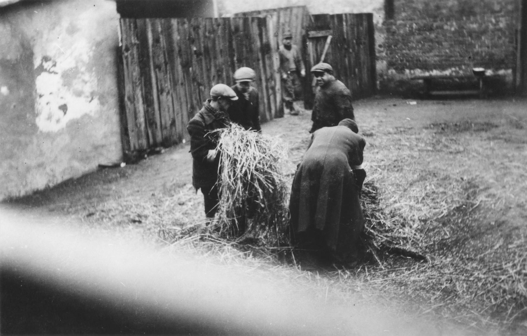 Jews gather straw in the Zawiercie ghetto.