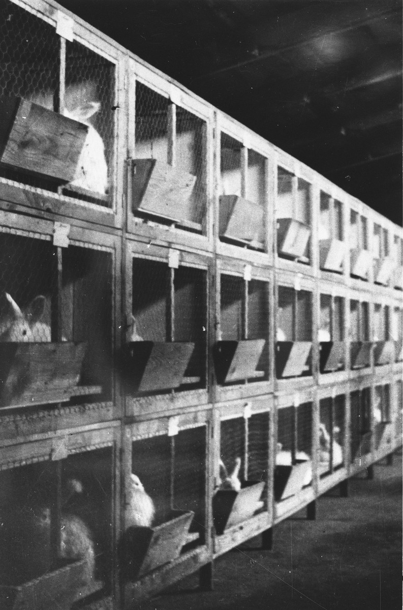 Rabbit hutches and rabbits raised by prisoners at a Slovak labor camp.