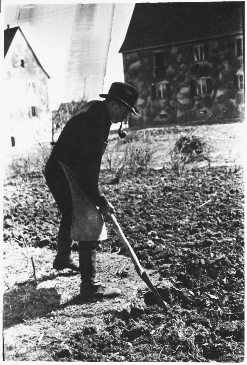 A man digs in a garden in the Windsheim displaced persons' camp.