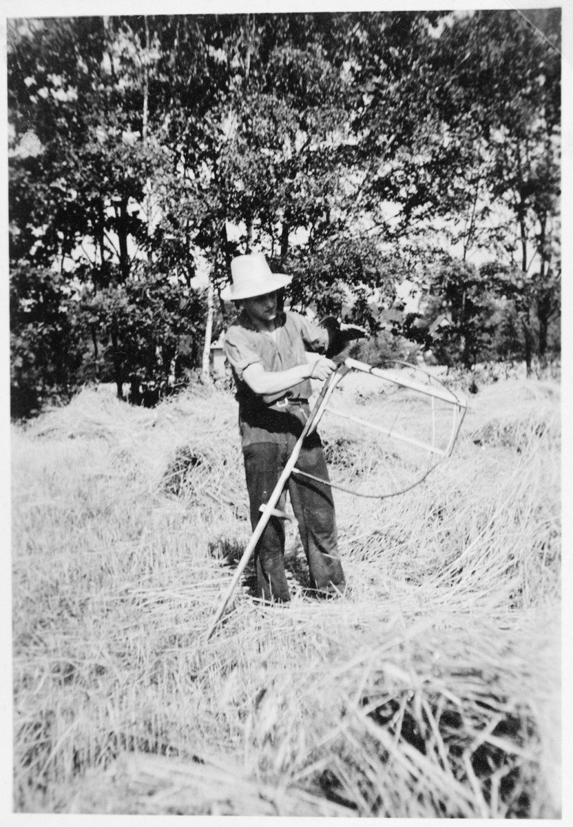 A man working and living in the Gross Breesen vocational center [sharpens a scythe] on a hay field.