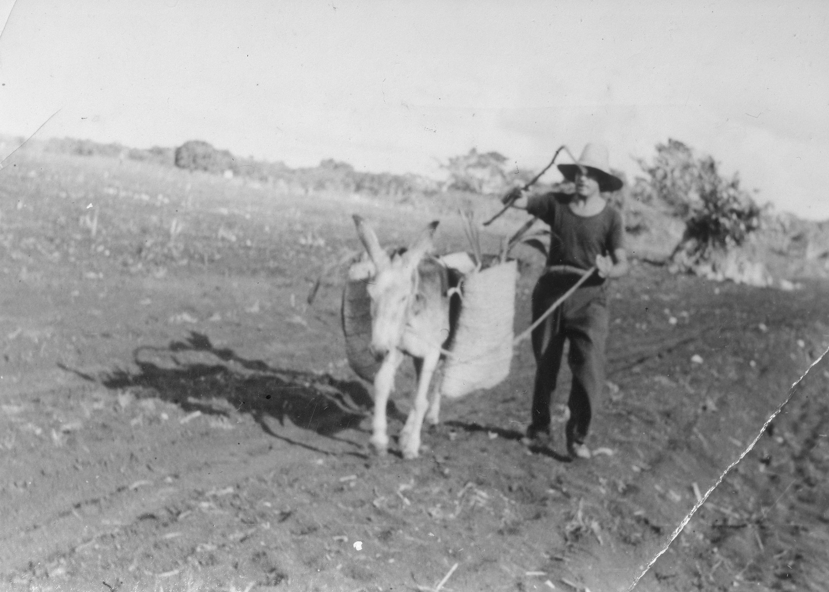 Franz Blumenstein plows a field at the Jewish agricultural colony in Sosua, Dominican Republic.