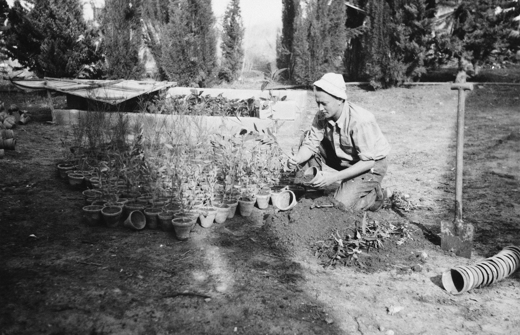 A kibbutz member plants potted plants in a garden in Kibbutz Saad.  Pictured is Israel Dubner.