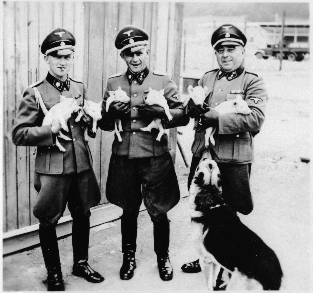 Three members of the SS staff in Gross-Rosen pose holding six piglets.  The adjutant to the commandant, Kuno Schramm, is standing on the left.  In the center is Anton Thumann.