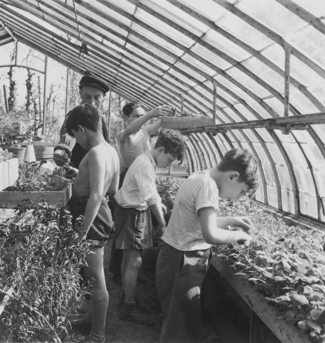 Children work in the greenhouses of La Forge, an OSE children's home in Fontenay-aux-Roses.  Pictured with his arms extended is Richard Nussbaum.