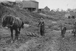 A Jew uses a crude horse-drawn plow to prepare an agricultural plot in the Kovno ghetto.