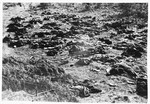 Burned corpses lie on the grounds of the Klooga concentration camp.