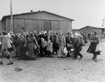 Evacuating female political prisoners from Bergen-Belsen.