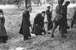Under the supervision of Polish soldiers, elderly religious Jews dig anti-tank trenches to impede the German invasion.