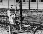 The bodies of two Dutch Jews who committed suicide by touching the high-tension fence in Mauthausen.