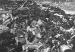 Corpses in Klooga stacked for burning.