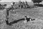SS officer Karl Hoecker plays with his dog Favorit.