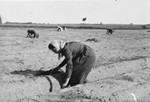 Edith Hahn, a Viennese Jew, performs forced labor in a farm in Osterburg, Germany.
